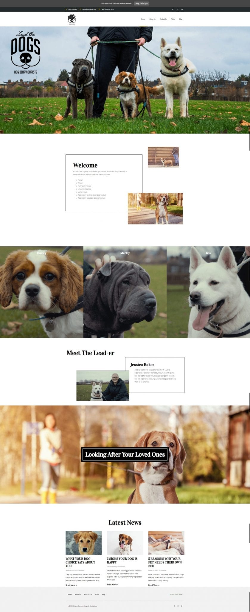 leadthedogs